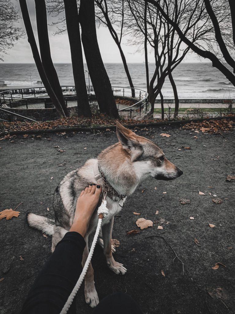 na spacerze z psem na smyczy