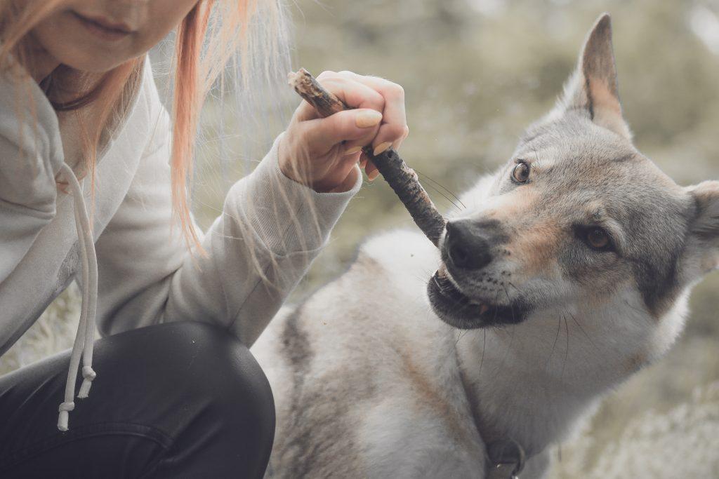stan emocjonalny psa